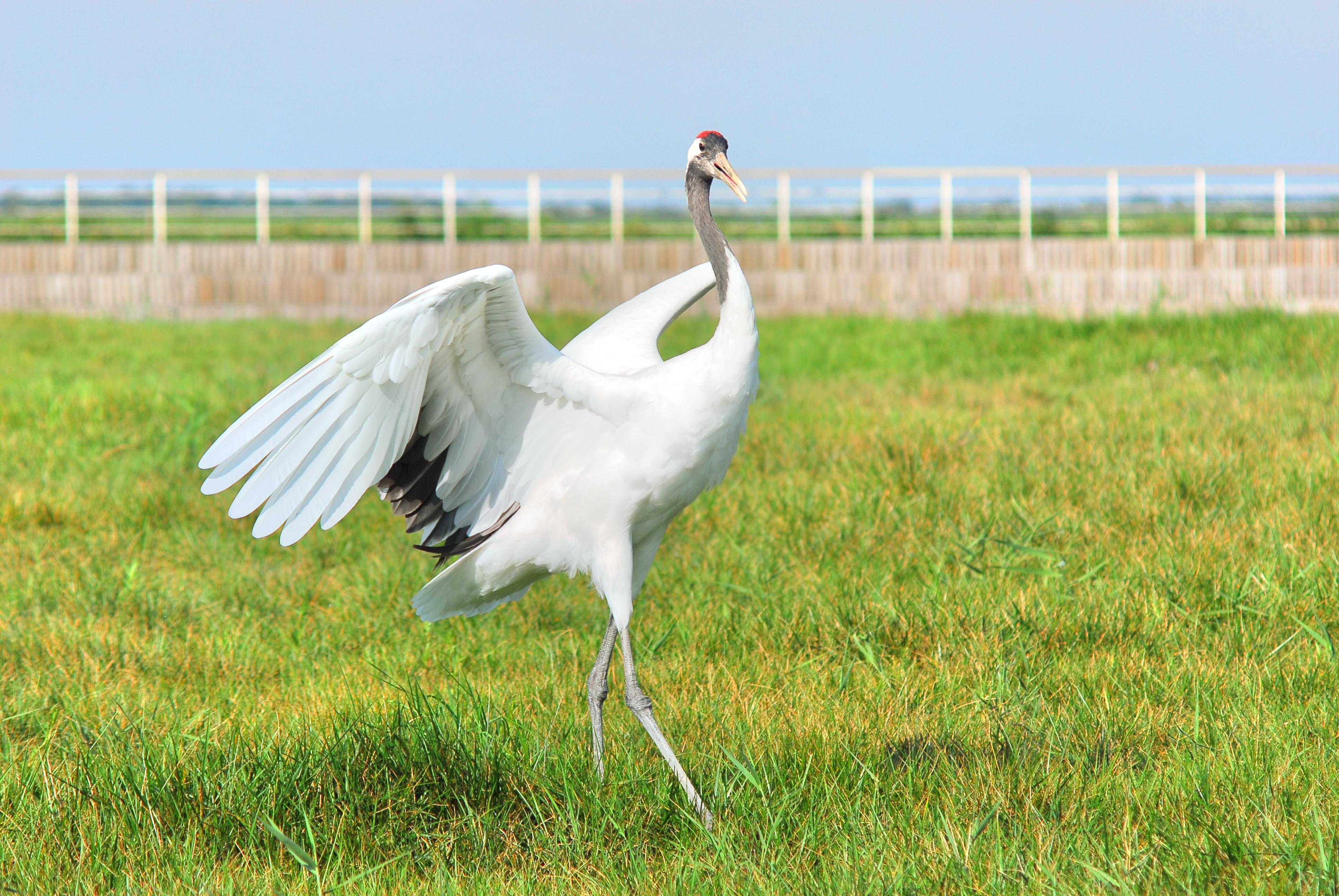 Yancheng Wetland National Nature Reserve Rare Birds