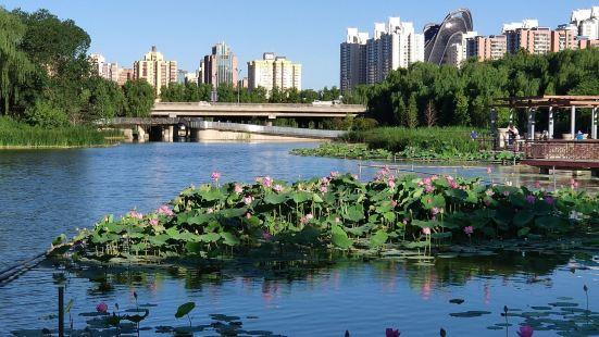 Honglingjin Park Botany Viewing Area