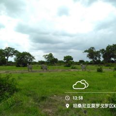 Mikumi National Park User Photo