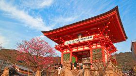 京都運動活動