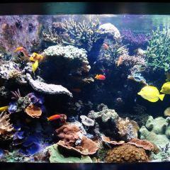 東倫敦海洋館用戶圖片