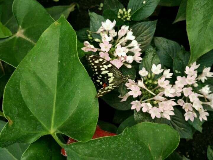 Maison des Papillons