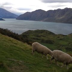 Roys Peak Track User Photo
