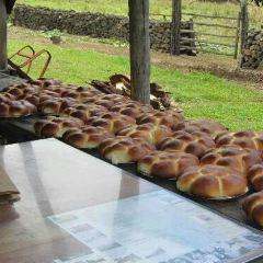 科納咖啡農場用戶圖片