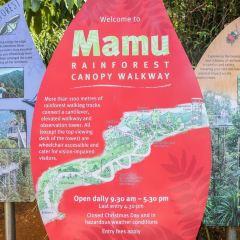 瑪姆雨林天空步道用戶圖片