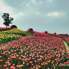 金卉莊園用戶圖片