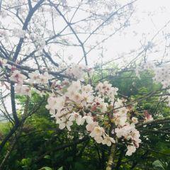 난안 향초 세계 여행 사진