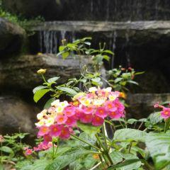 蘭花公園用戶圖片