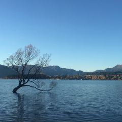 Lone Tree of Lake Wanaka User Photo