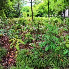 軽井沢町植物園のユーザー投稿写真