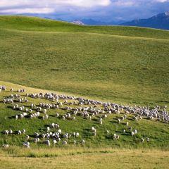 當週草原風景區用戶圖片