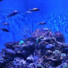 深海傳奇用戶圖片