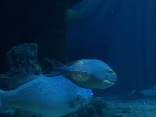 라후탄 극지해양세계