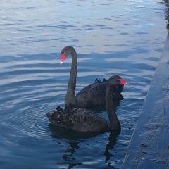 羅托伊蒂湖用戶圖片