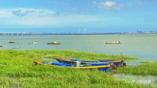晉江河口濕地