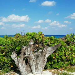 Playa Pez Volador User Photo