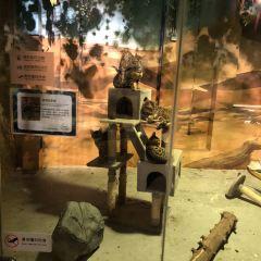 杭州嗒咪動物奇幻樂園用戶圖片