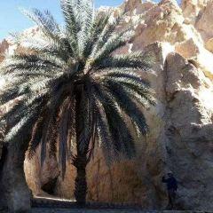 shrik oasis User Photo