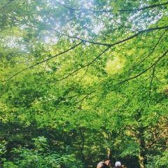 비자림 여행 사진