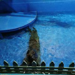 哈爾濱極地館用戶圖片
