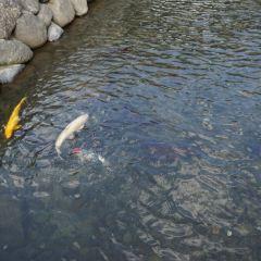 메가네바시 여행 사진