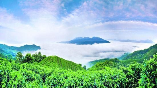 南山茶海景區
