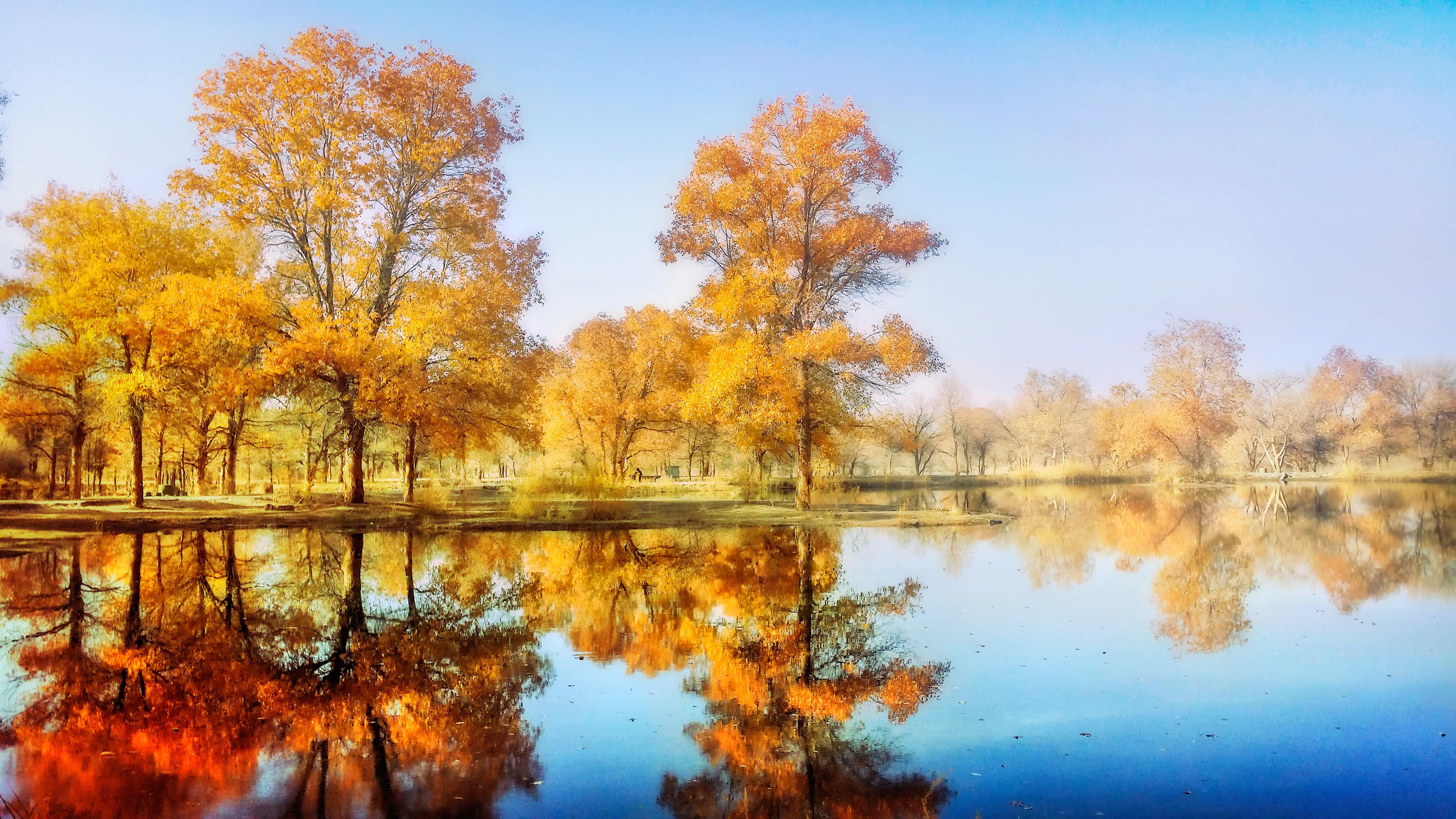 塔里木胡楊林公園