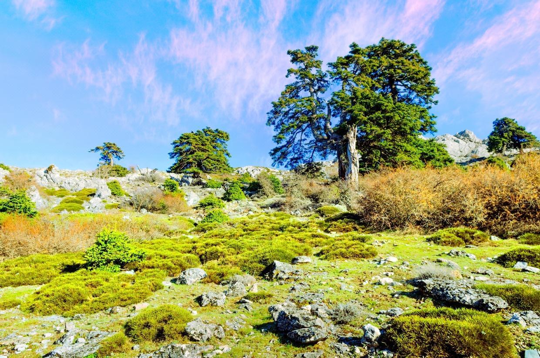拉斯尼弗斯山脈自然公園