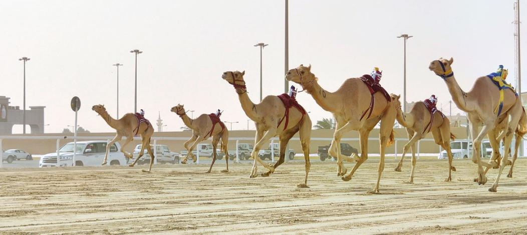 Al Shahaniya Racetrack
