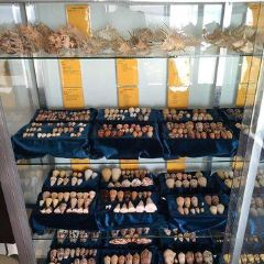Sea Shell Collection by Argonauta Boracay User Photo