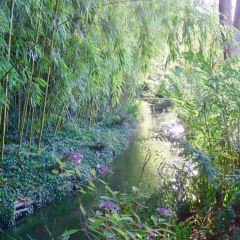 Claude Monet's House and Gardens User Photo