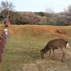 奈良公園用戶圖片