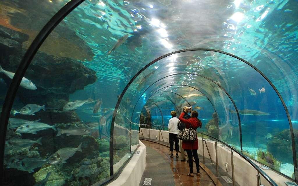Aquarium Barcelona Ticket