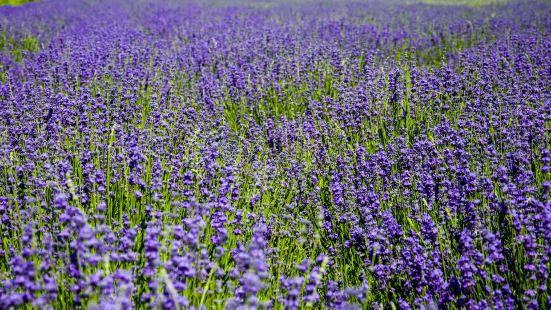 紫蘇麗人薰衣草創意產業園