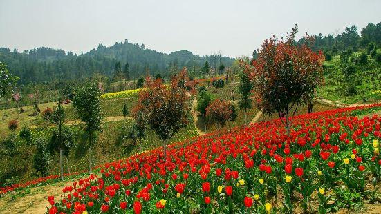 省中亞熱帶高原珍稀植物園
