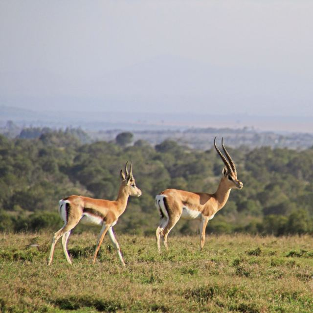 Sweetwaters Game Reserve