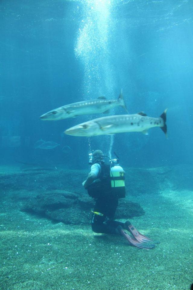烏沙卡海洋世界