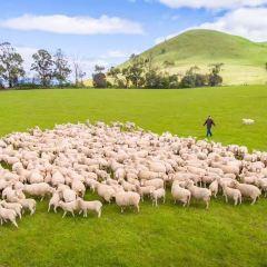 柯林佳農場用戶圖片
