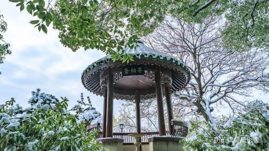 Sturdy Cypress Garden