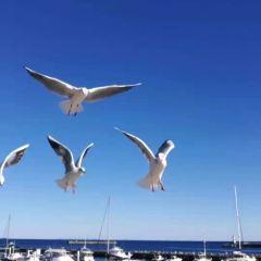 親水公園のユーザー投稿写真
