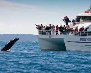 The Best Place to Watch Whales in Australia