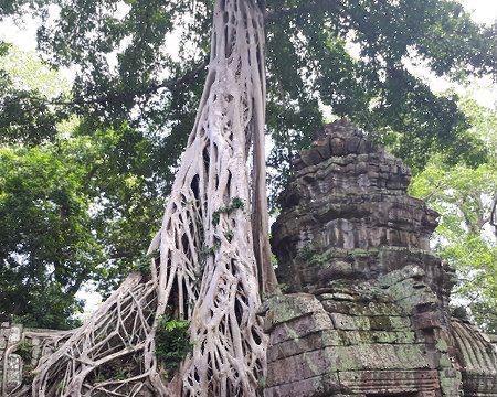 Ta Prohm寺廟