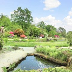 Gorsedd Gardens User Photo