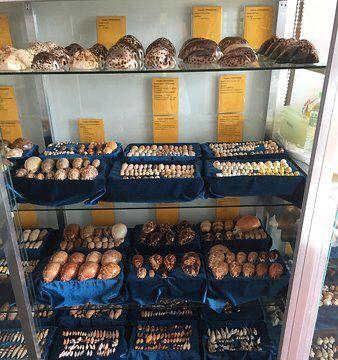 Sea Shell Collection by Argonauta Boracay