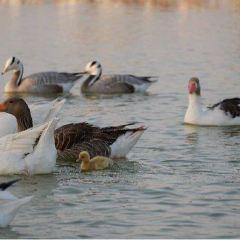 Al Qudra Lake User Photo