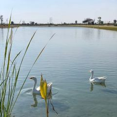Love Lake User Photo