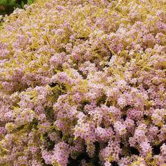 Royal Tasmanian Botanical Gardens User Photo