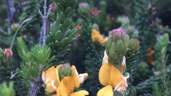 卧龙岗植物园虽然规模不大,但环境非常漂亮,与不远处的大海以及