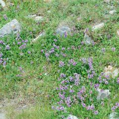 Mount Linlv User Photo