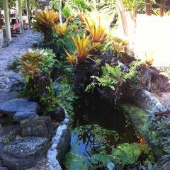 烏魯龐森林保護區用戶圖片